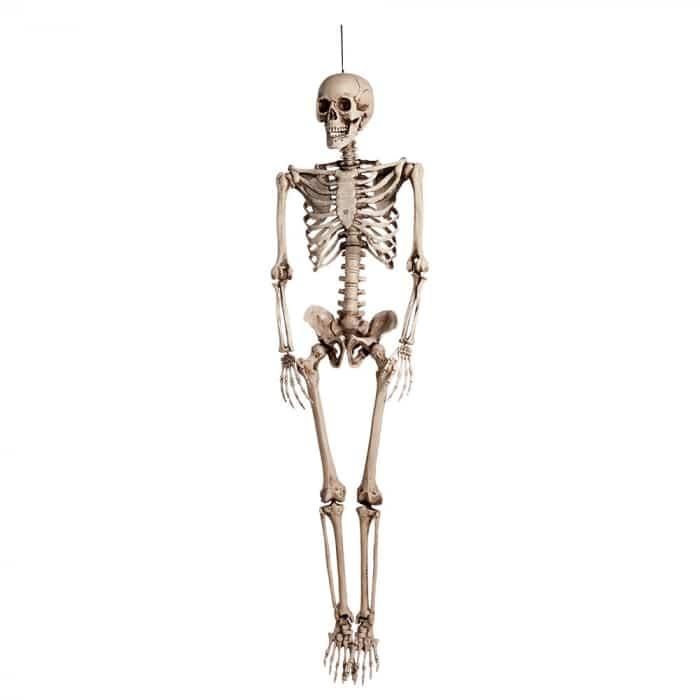 Skelett 160 cm